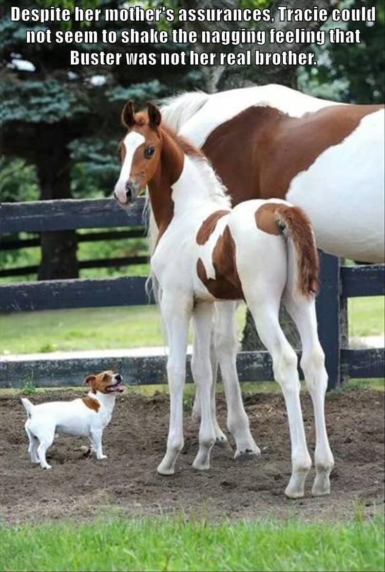 animals - 8774081024