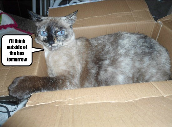 box caption Cats tomorrow - 8774082560