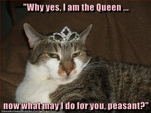 animals queen peasant caption Cats - 8774085632