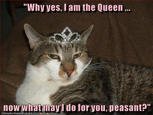 animals queen peasant caption Cats - 8774085632