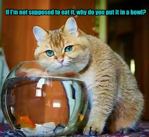 fish bowl Cats - 8774091520