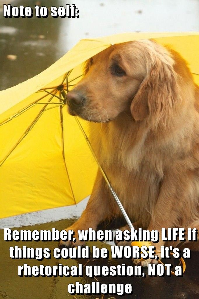 dogs,life,caption,rain