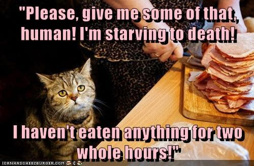animals eat food caption Cats - 8774097152