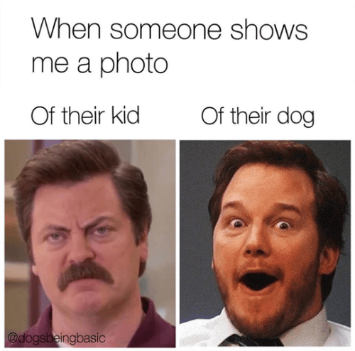 photo of kids reaction vs photo of dog