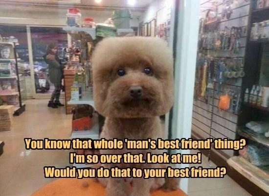 dogs,best,mans,friend,over that,caption