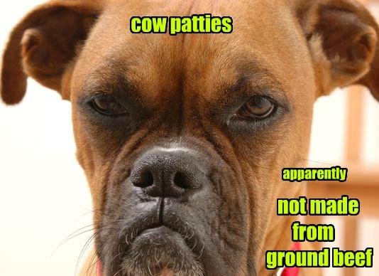 patties dogs cow caption - 8774127360