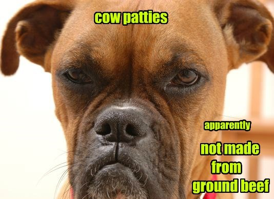 patties dogs cow caption - 8774127360