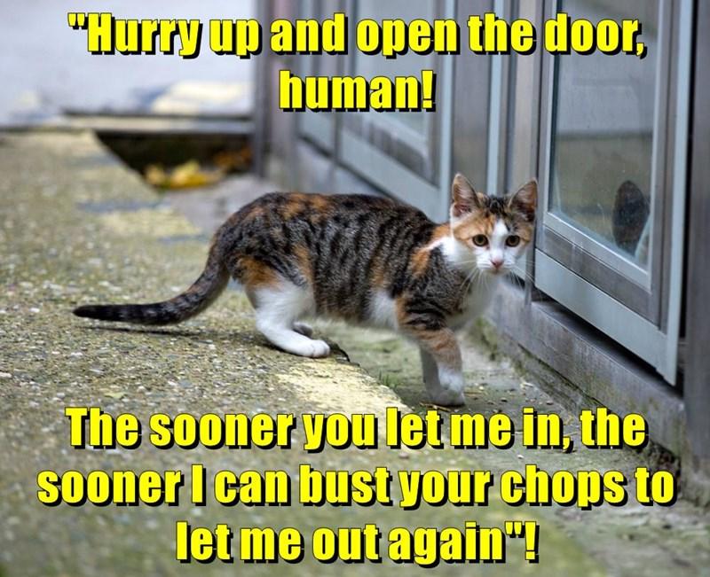 animals door in cat out open caption - 8774132736