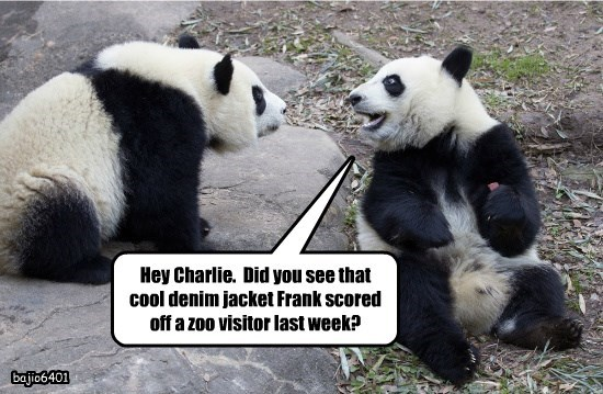 Hey Charlie.  Did you see that cool denim jacket Frank scored off a zoo visitor last week?