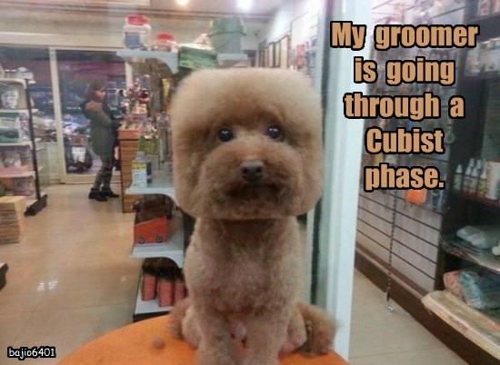 dogs,cubist,caption,groomer