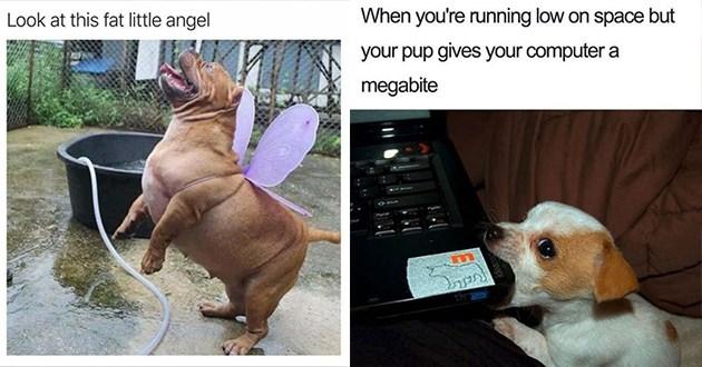 funny dog doggo memes