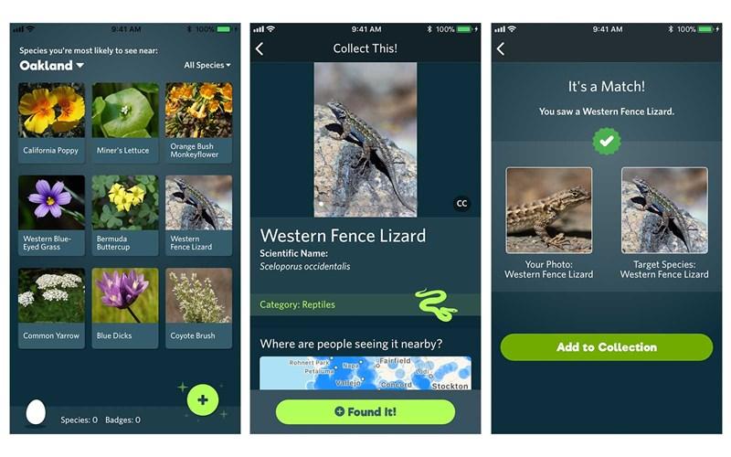 seek nature identify app
