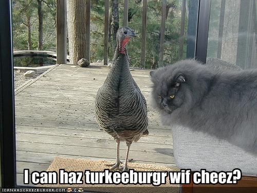 Cheezburger Image 877885184