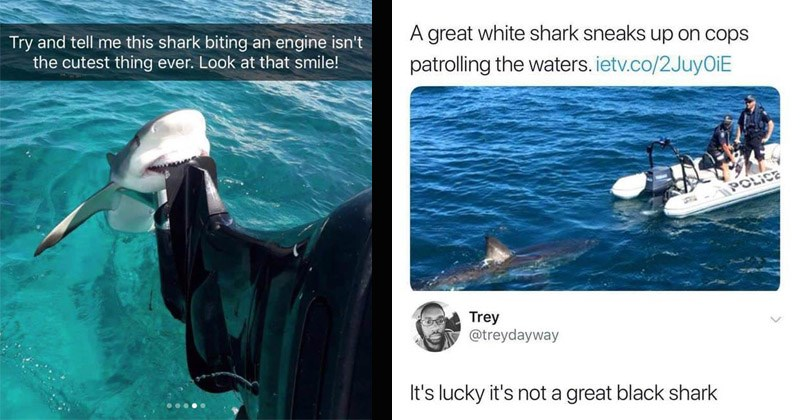 Funny memes about sharks, animals