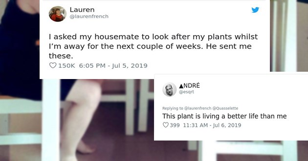 housemate looks after plant