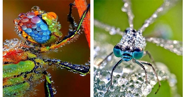 insects morning dew photography