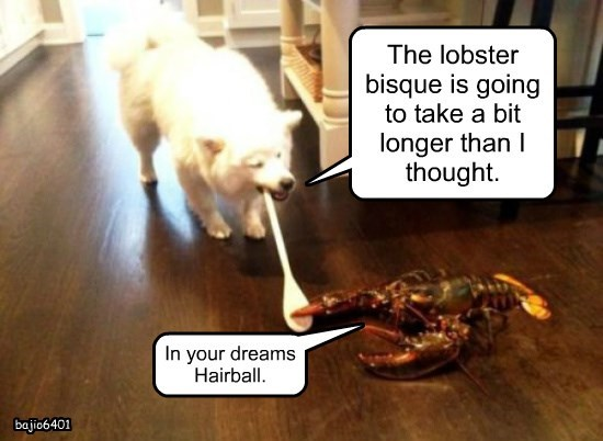 lobster,dogs,cooking,caption