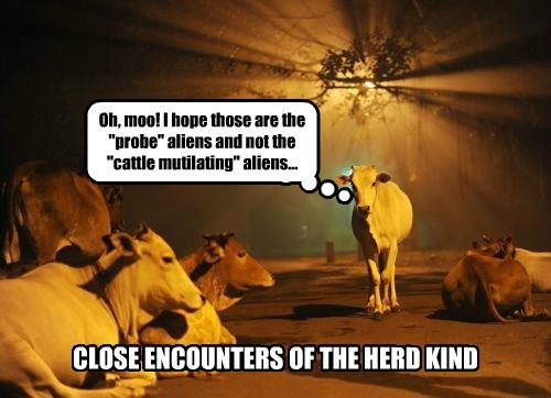 Close Encounters of the Herd Kind
