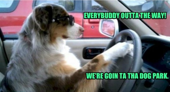 EVERYBUDDY OUTTA THE WAY! WE'RE GOIN TA THA DOG PARK.