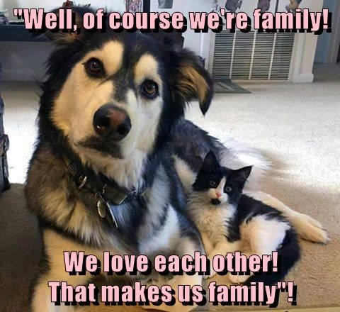 dogs,love,caption,Cats