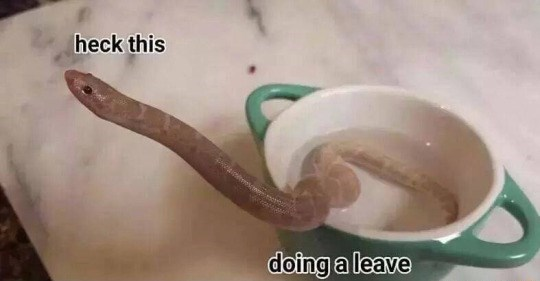 Snake bork meme - not that funny.