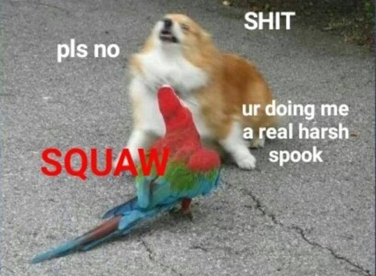 funny meme of a dog and a bird