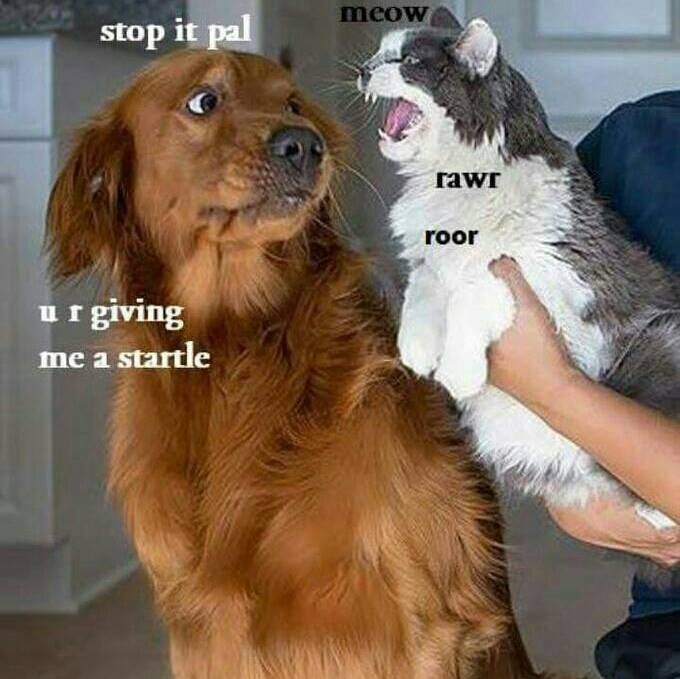 Rowr meme of a dog and cat interacting and its sort of funny.