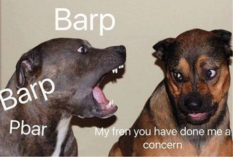 Funny meme of dogs 'you have done me a concern'