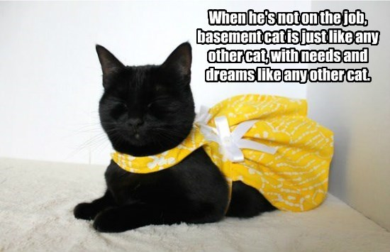 basement cat,dreams,caption,Cats,pretty