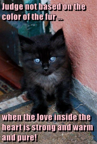 Judge not based on the color of the fur ...  when the love inside the heart is strong and warm and pure!