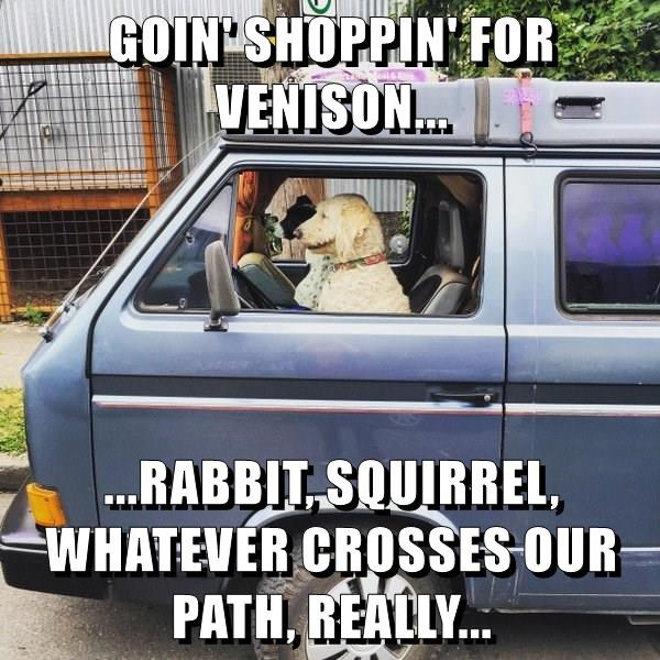 animals dogs roadkill shopping driving caption - 8792883200