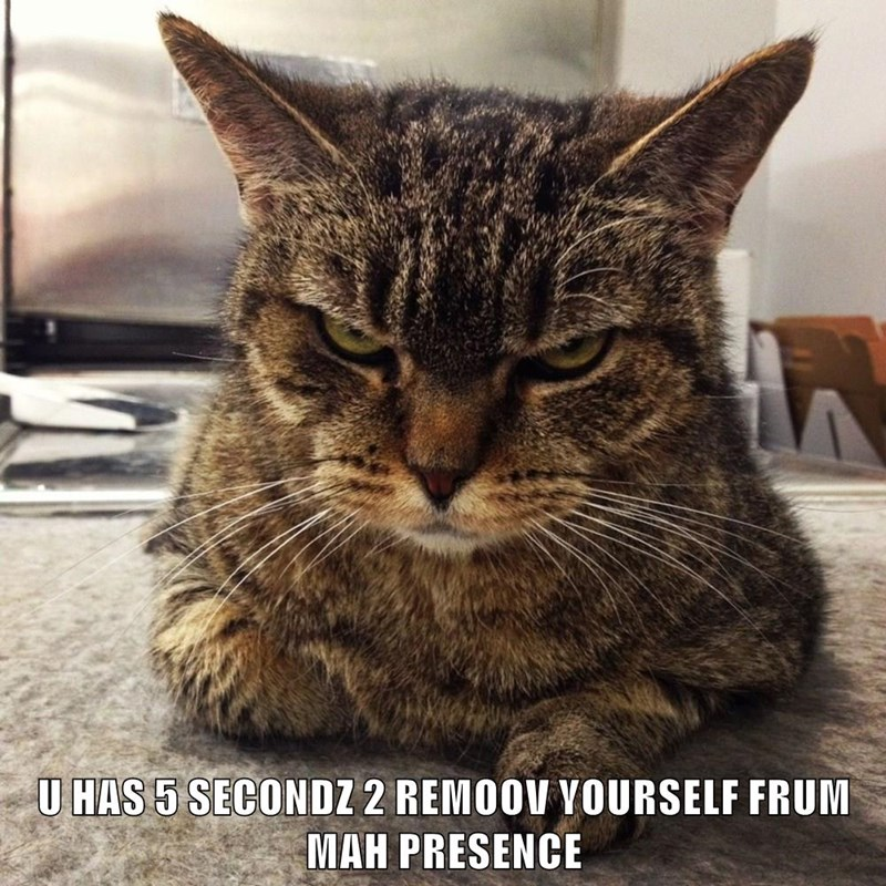 animals seconds grumpy caption Cats