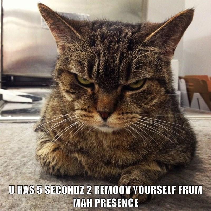 animals seconds grumpy caption Cats - 8792888320