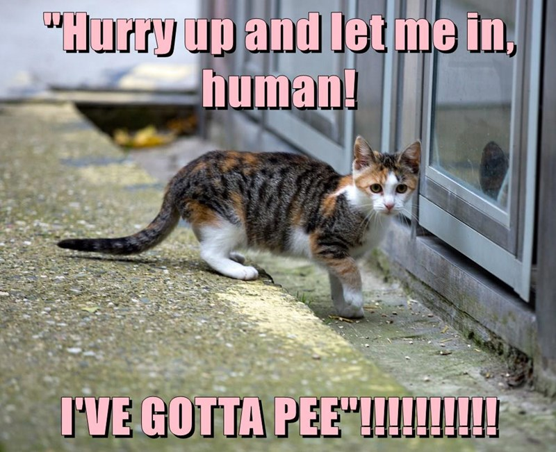 """Hurry up and let me in, human! I'VE GOTTA PEE""!!!!!!!!!!"