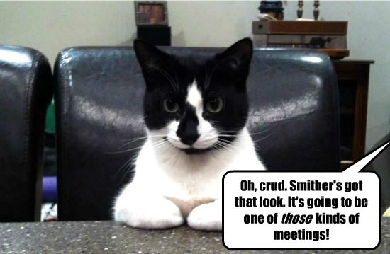 meeting caption Cats