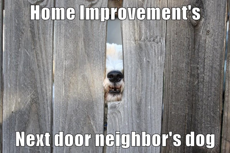 dogs,wilson,home improvement,caption