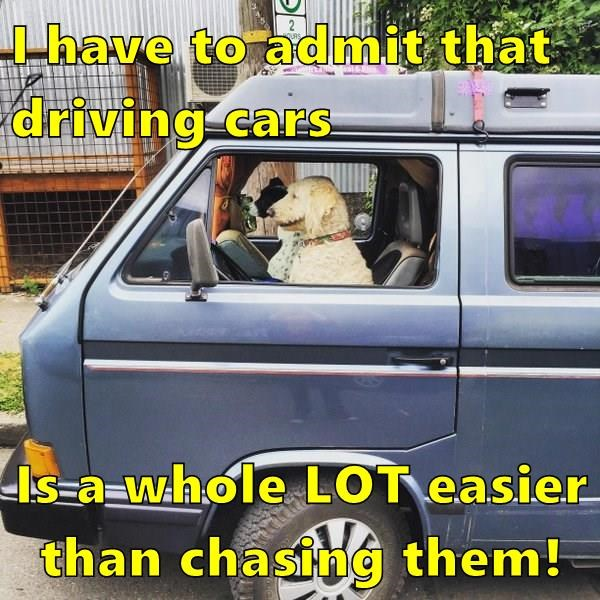 I have to admit that driving cars Is a whole LOT easier than chasing them!