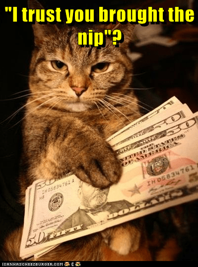 animals nip caption Cats money - 8792990464