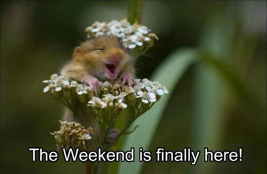 The Weekend is finally here!