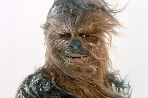 news-discovered-beetle-named-after-star-wars-wookiee-character