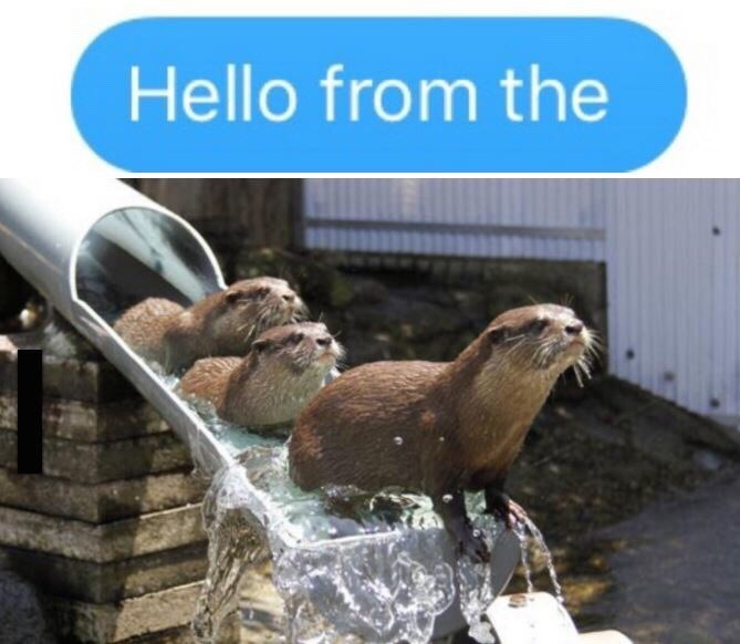 adele otters puns Hello, It's Me