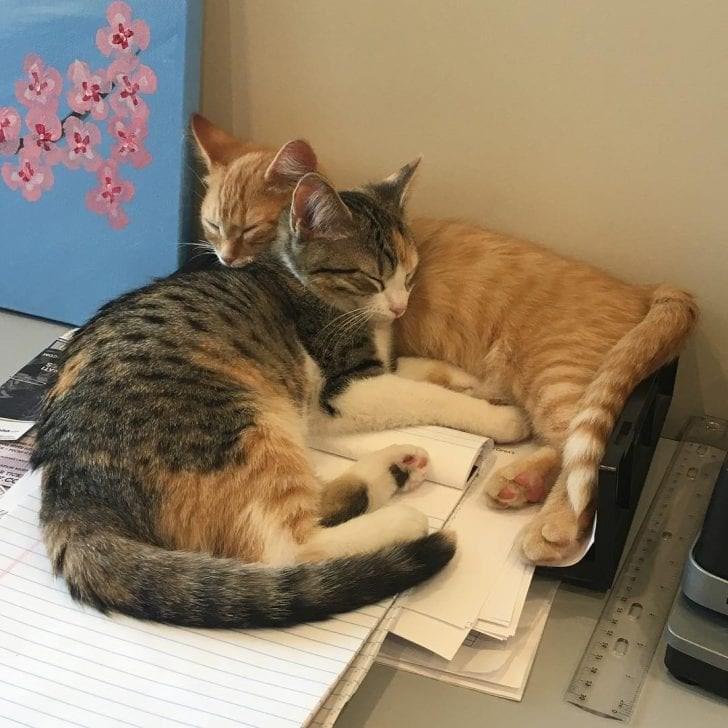 office kittens credit debit