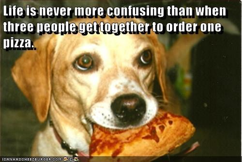 animals dogs life people confusing pizza three order caption - 8793156608