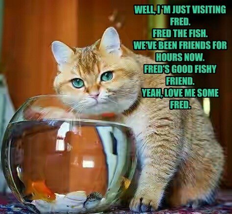 cat,fred,friends,caption,fish