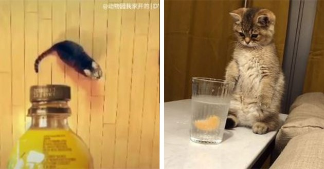 instagram cats video funny