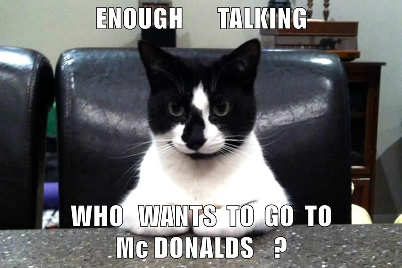 animals cat McDonald's talking caption enough - 8793365760