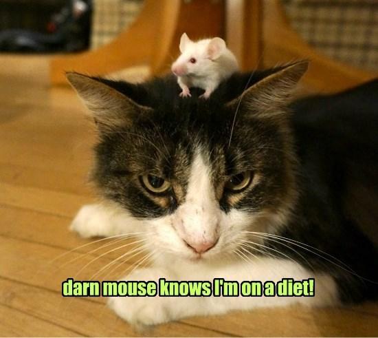 cat diet caption mouse - 8793370368