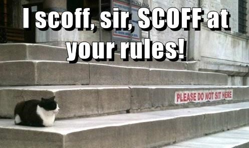 rules,cat,scoff,caption,rebel
