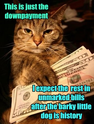 dogs caption Cats money hitman - 8793390336