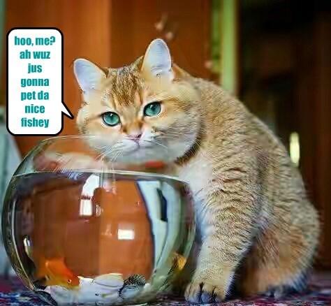 cat fishy pet caption - 8793392640